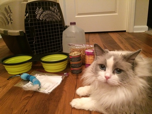Cat sits on the floor with pet toy, water and food bowl, and cat nip next to her.