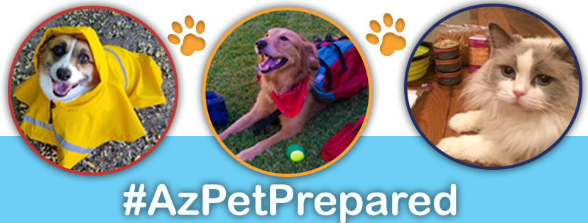 Three pets pose. Under the photos it reads #AzPetPrepared